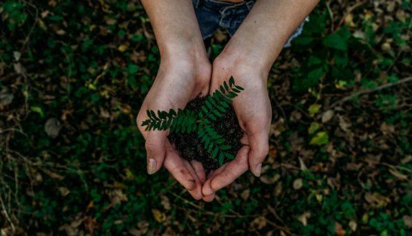 sostenibilità e scatole su misura