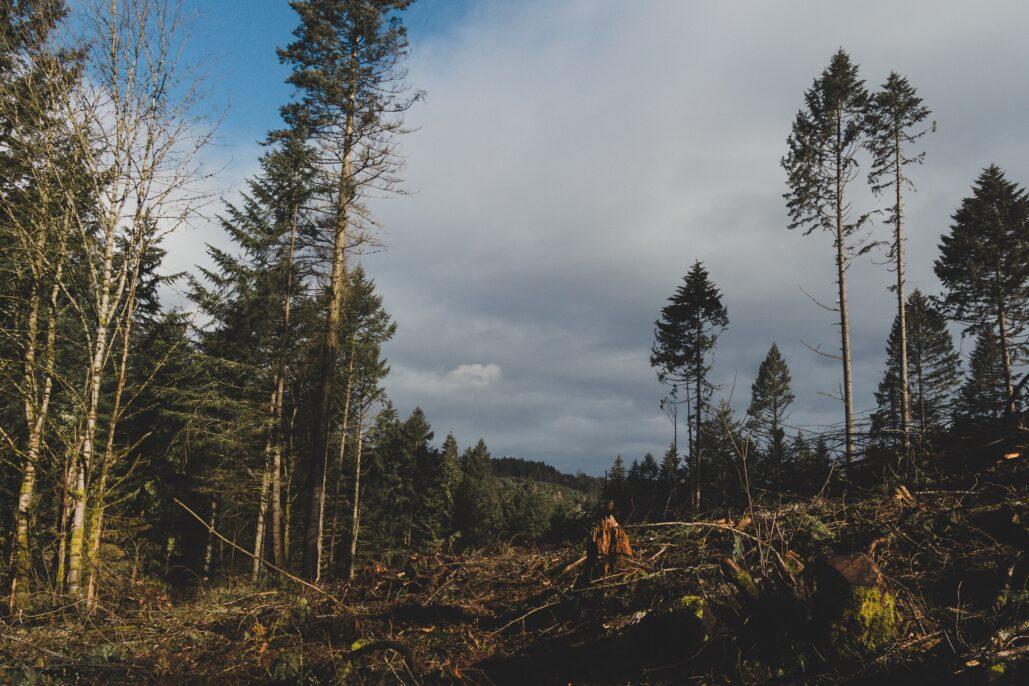 foreste sostenibilità